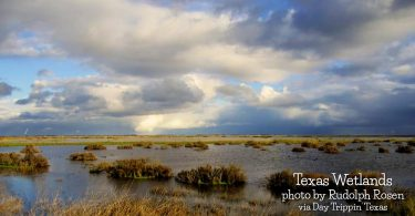 Texas Wetlands by Rudolph Rosen