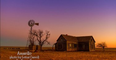 Amarillo Dream by Lotus Carroll