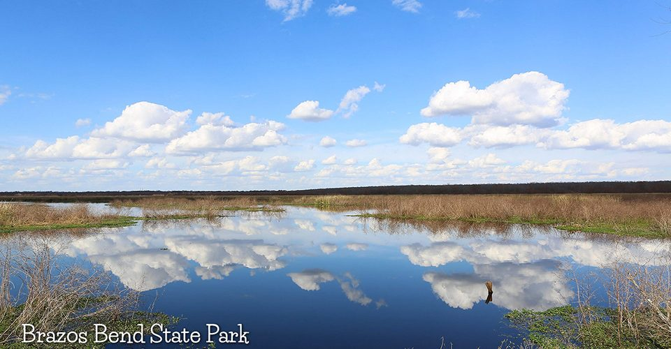 Brazos Bend State Park by Bill Jacomet
