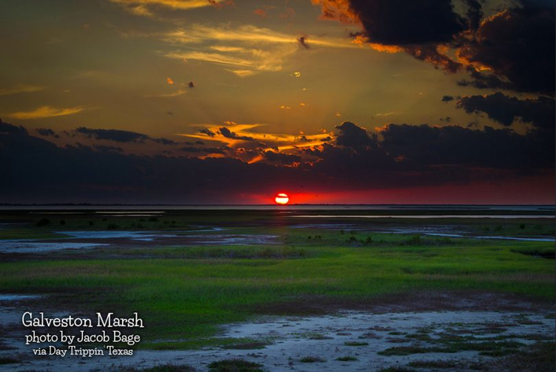 Marsh in Galveston by Jacob Bage