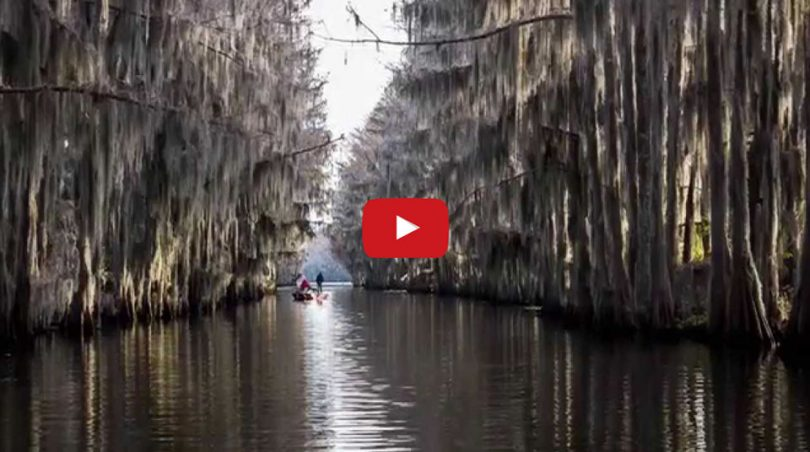 Caddo Lake slideshow