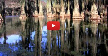 Passage into the Primeval, Caddo Lake